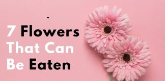 Flowers That Can Be Eaten